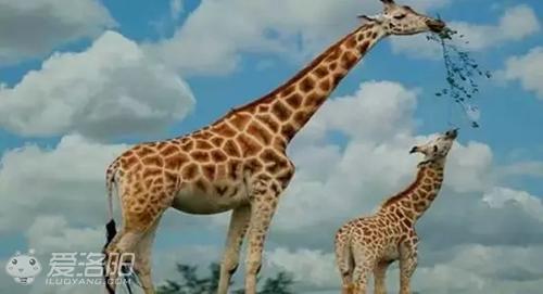 仅需40元带你去新乡五龙山坐过山车+野生动物园看