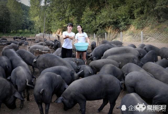 洛阳美女姐妹深山养猪常被表白!